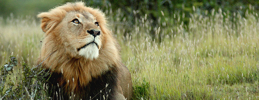 Lions and other wildlife can often be heard from the adjoining Farm Inn